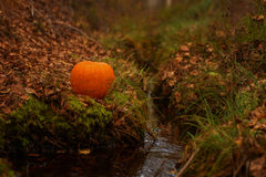 Halloween pumpkin on leaves in woods Royalty Free Stock Photography