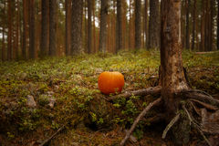 Halloween pumpkin on leaves in woods Royalty Free Stock Photo