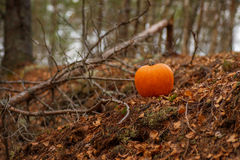 Halloween pumpkin on leaves in woods Stock Photos
