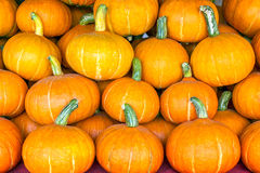 Halloween pumpkin. A lot of pumpkins for Halloween royalty free stock image
