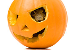 Halloween pumpkin mouse Royalty Free Stock Photography
