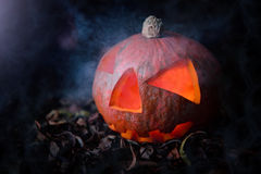 Halloween Pumpkin. In A Mystic Forest At Night Royalty Free Stock Photos