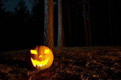 Halloween Pumpkin In A Forest At Night. Halloween Pumpkin In A Mystic Forest At Night Stock Images