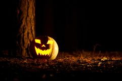 Halloween Pumpkin In A Forest At Night. Halloween Pumpkin In A Mystic Forest At Night Stock Photo
