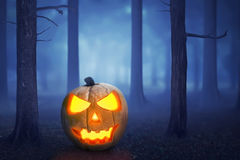Halloween pumpkin in a mystical forest. In the moonlight Stock Photography