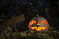 Halloween pumpkin at night. In forest royalty free stock image