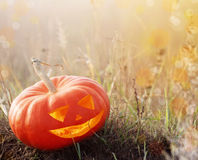 Halloween pumpkin outdoor Royalty Free Stock Photography
