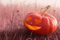Halloween pumpkin outdoor Stock Photography