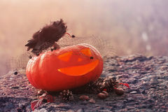 Halloween pumpkin outdoor Stock Photos