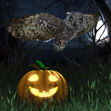 Halloween pumpkin and owl in night forest Royalty Free Stock Image