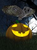 Halloween pumpkin and owl in night forest Stock Photography