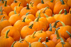 Halloween Pumpkin Patch royalty free stock images