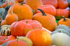 Halloween Pumpkin Patch Stock Image