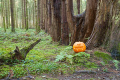 Halloween Pumpkin in pine forest Royalty Free Stock Images