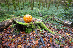 Halloween Pumpkin in pine forest Royalty Free Stock Photo