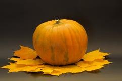 Halloween pumpkin. On a dark background Royalty Free Stock Image