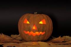 Halloween pumpkin. On a dark background Stock Image