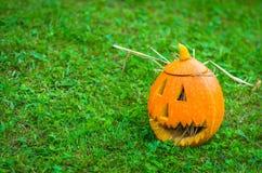Halloween pumpkin. S on green grass, decoration of grown pumpkins Stock Image