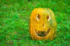 Halloween pumpkin. S on green grass, decoration of grown pumpkins Royalty Free Stock Photos
