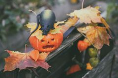 Halloween pumpkin and a rat on a wooden box among the autumn foliage. Stock Photos