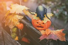 Halloween pumpkin and a rat in a wooden box among the autumn foliage. Toned. Stock Photos