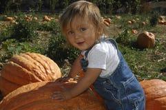 Halloween pumpkin scarecrow Royalty Free Stock Image