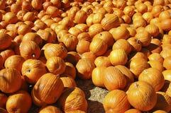 Halloween pumpkin scarecrow Royalty Free Stock Photo
