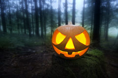 Halloween pumpkin. Scary halloween pumpkin in the dark forest at night Royalty Free Stock Photo