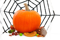 Halloween pumpkin and spider web Royalty Free Stock Photos