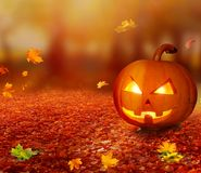 Halloween pumpkin in autumn forest . royalty free stock image