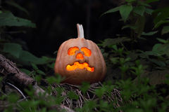 Halloween pumpkin. Still life with halloween pumpkin in the dark forest Royalty Free Stock Image