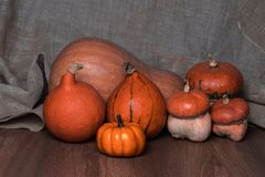 Halloween pumpkin still life royalty free stock photo