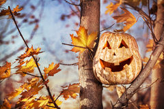 Halloween pumpkin on the tree Royalty Free Stock Photos