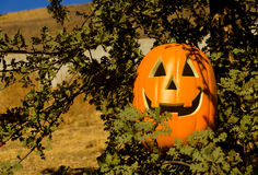 Halloween pumpkin on the tree Stock Photos
