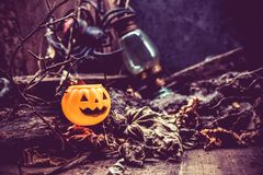 Halloween. Pumpkin, trick or treat in autumn season Stock Image