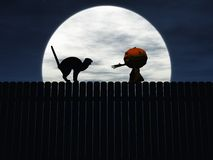 Halloween pumpkin trying to catch angry cat. Stock Images