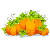 Halloween pumpkin vector card Stock Images