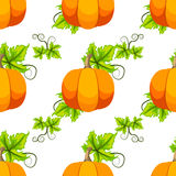 Halloween pumpkin vector card Stock Photos