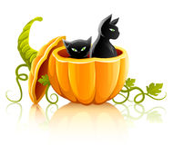 Halloween pumpkin vegetable with black cats Stock Images