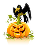 Halloween pumpkin vegetable with black raven bird Stock Images