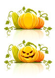 Halloween pumpkin vegetables with green leaves Royalty Free Stock Photo