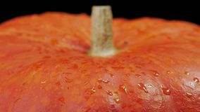 Halloween pumpkin with water drops stock footage
