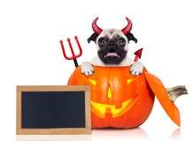 Halloween pumpkin witch dog Royalty Free Stock Photo