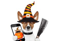 Halloween pumpkin witch dog selfie royalty free stock photography