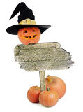 Halloween pumpkin on white background. Halloween pumpkin in witch hat on wooden board on white background stock photos
