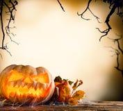 Halloween pumpkin on wood with dark background Royalty Free Stock Photo