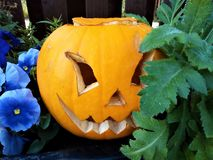 Halloween pumpking with scary smiling face. Halloween carved scary smiling pumping face between flowers in the garden royalty free stock photo