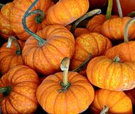 halloween pumpkins Φρέσκες κολοκύθες ως υπόβαθρο - υπόβαθρο αποκριών Στις 31 Οκτωβρίου αποκριών ετησίως στοκ εικόνα με δικαίωμα ελεύθερης χρήσης