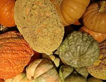 halloween pumpkins Φρέσκες κολοκύθες ως υπόβαθρο - υπόβαθρο αποκριών Στις 31 Οκτωβρίου αποκριών ετησίως στοκ εικόνες