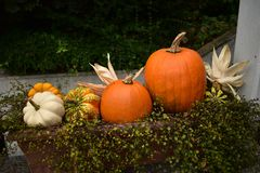halloween pumpkins στοκ εικόνες